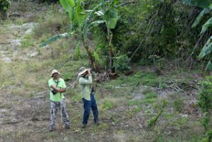 Jose Salguero and Jose Colón conduct a bird count during this project in Puerto Rico. Photo credit: Pedro William Santana.